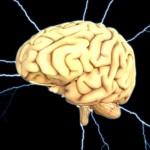 brain-1845940